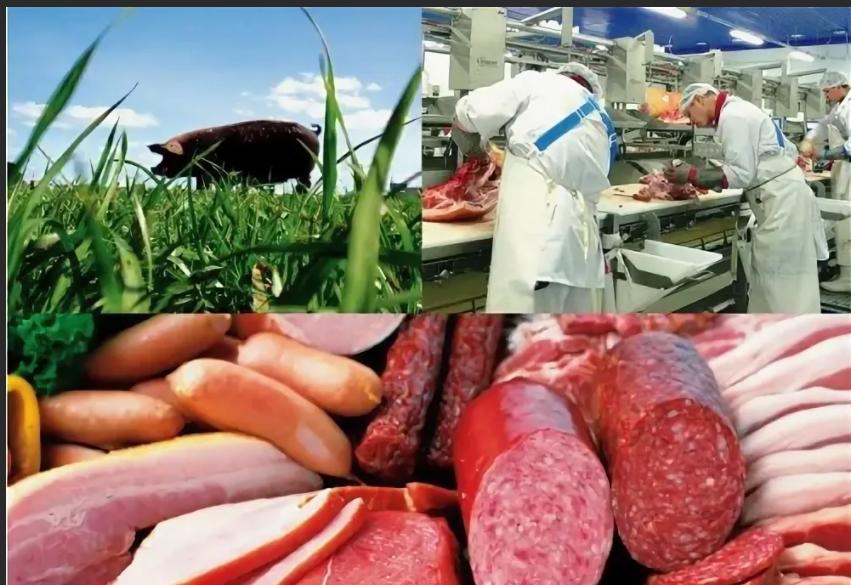 """ПМ.02 """"Производство и первичная обработка продукции животноводства"""""""