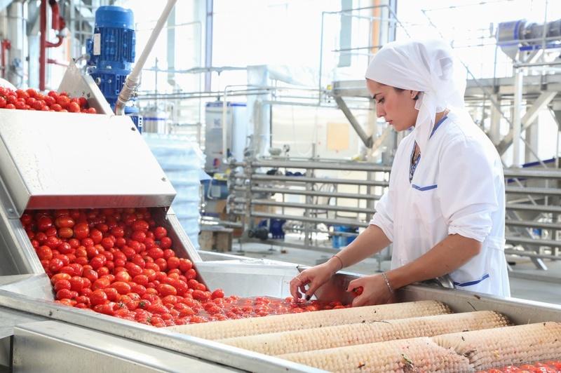 Производство и первичная обработка продукции растениеводства